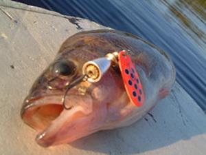0 Классика рыбалки Блю Фокс Супервибракс анонс