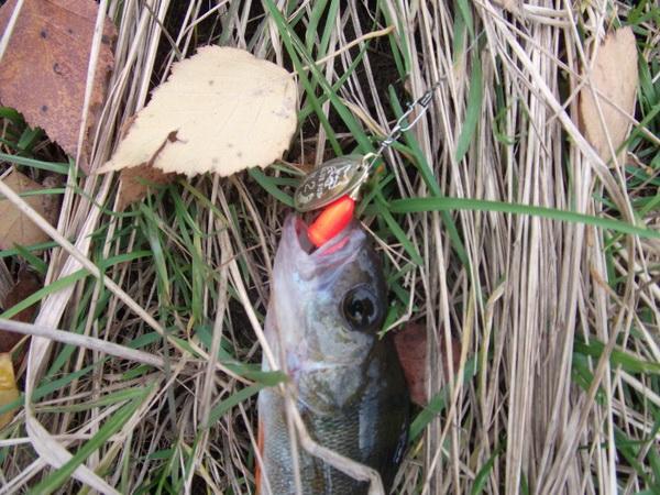 0 Классика рыбалки Блю Фокс Супервибракс уловистая расцветка