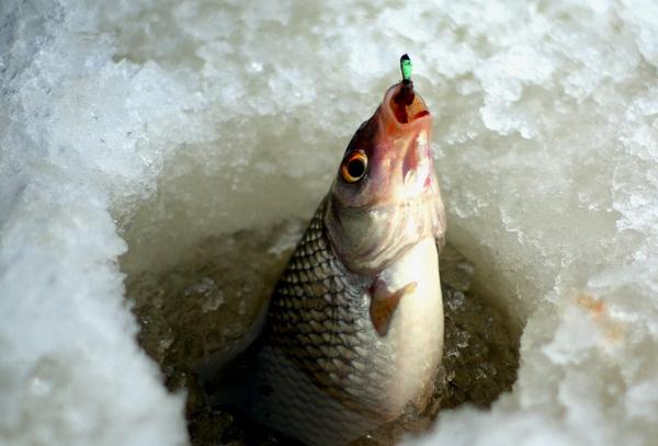 ribalka po poslednemu ldu 2