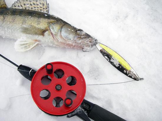 Ловля судака зимой 1