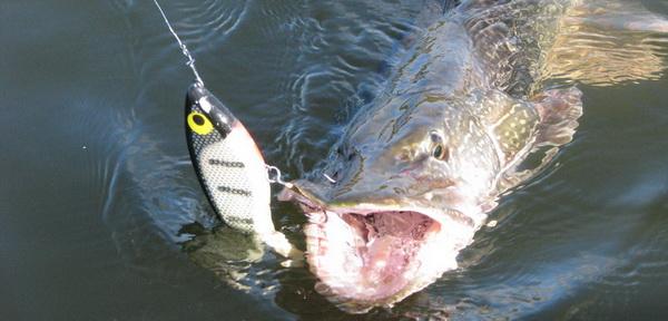 рыбалка на джерки