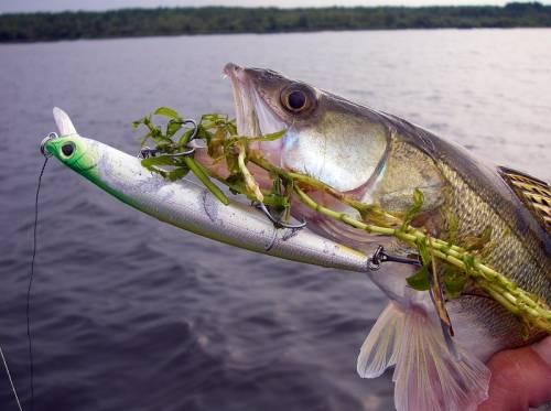 ribalka-v-avguste